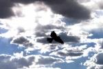 el-vuelo-eterno-de-ibn-firnas
