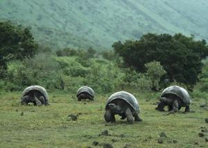 isla tortugas gigantes