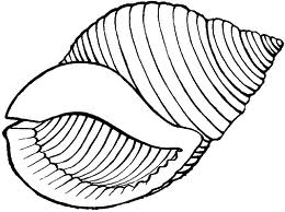 Image Result For Shell Coloring Pages