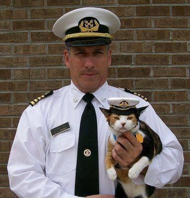 capitan y gato
