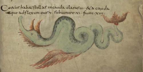 Monstruos marino