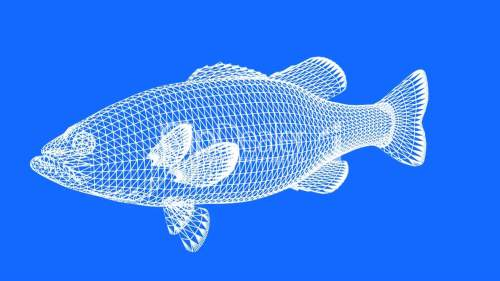 1--1342975-Moving of 3D fish.sea,ocean,water,animal,isolated,tropical,underwater,aquarium,Grid,mesh,sketch,structure,