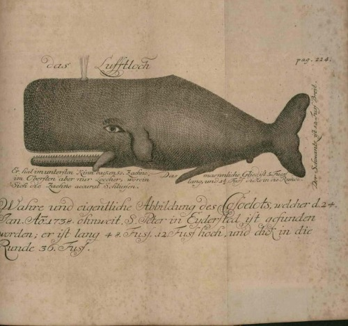 Dibujo de una ballena, en la obra de J. Anderson