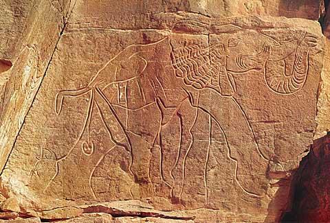 Petroglifo libio que representa a un elefante africano. época troglodita.