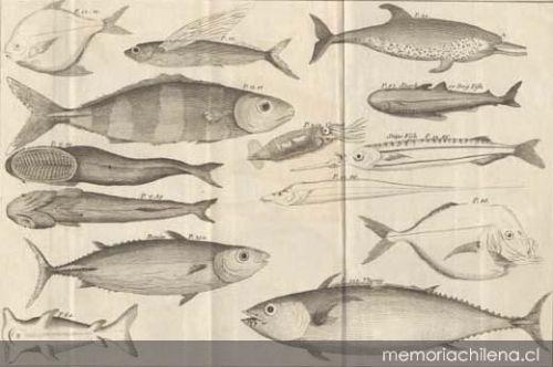 Dibujos originales de la expedición de Bouganville