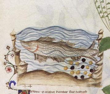 Un pez (p. 30)