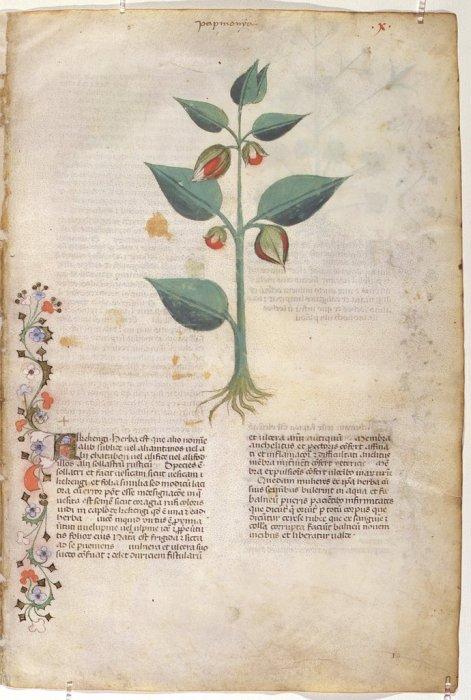 Ejemplo de una página del códice, en el que se puede apreciar la riqueza cromática y la belleza de sus ilustraciones