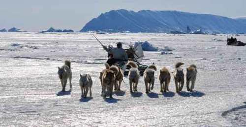 artico- trineo-perros-inuit