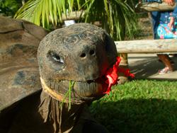 Una de las últimas imágenes de la tortuga gigante
