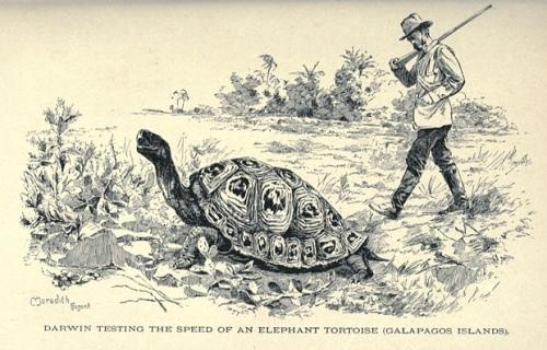 Un dibujo de la época de la tortuga. Fuente: The Guardian