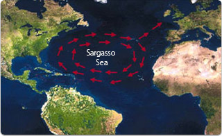 Una aproximación al territorio marino ocupado por este mar de algas