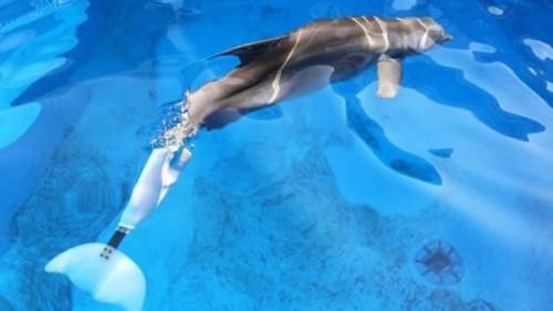 Robot delfín