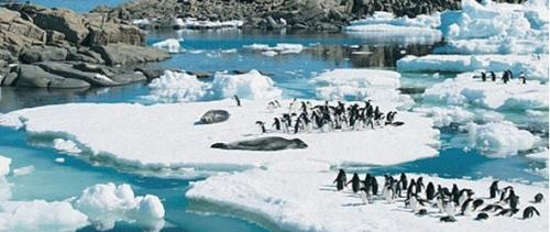 ecosistema-antartida