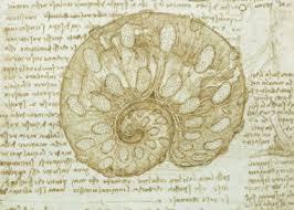 fosil 1