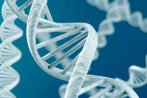 Para-que-sirve-el-ADN-2