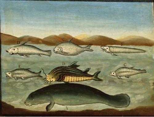 peces der bajo