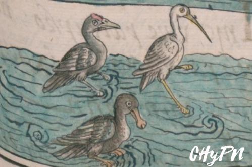 aves-acuaticas
