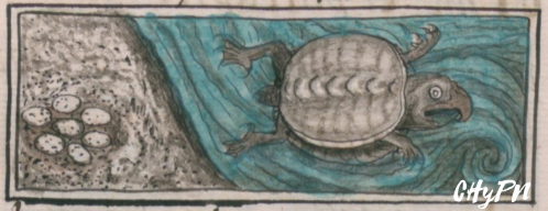 bernard-6-tortuga