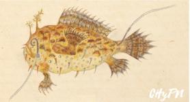 otro pez