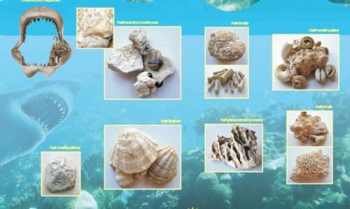 Restos Mar de Panonia