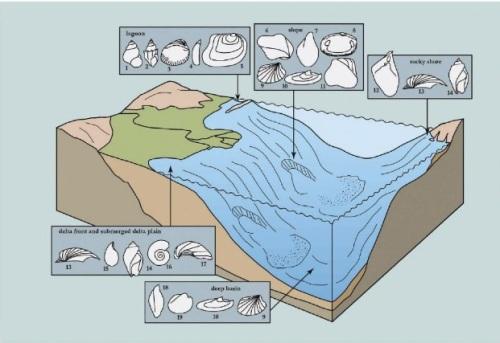 fosiles pannon