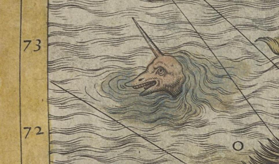 Narval mapa magnus