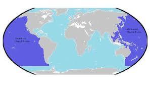 Pacifico cortado