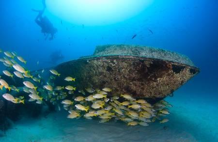 30394639-los-buzos-y-un-cardumen-de-pargos-nadar-alrededor-de-un-pequeño-naufragio-barco-bajo-el-agua