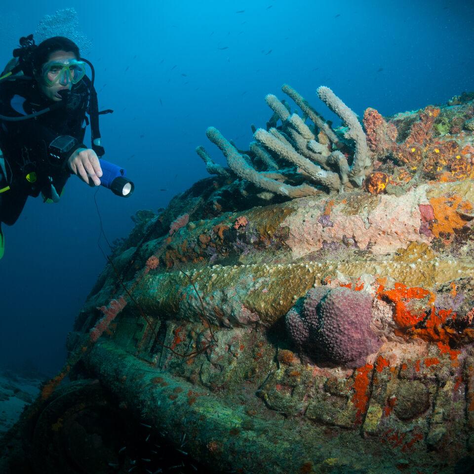 pecio cubierto coral